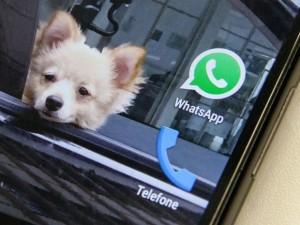 whatsapp_fabio-tito-g1_img_